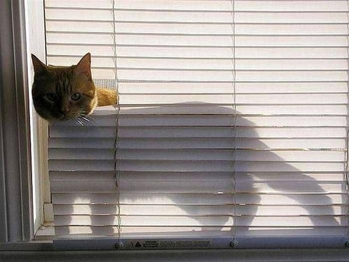 Как выглядит настоящее кошачье любопытство кошки