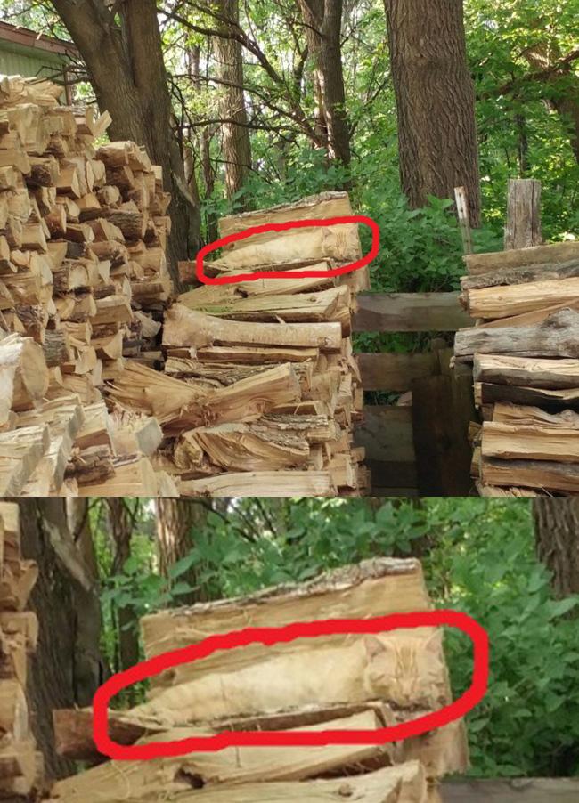 вам картинка с дровами нашли кота последнего держали тайне