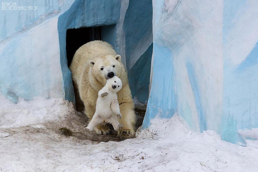 удивительные моменты из жизни медвежат (шикарные фото)