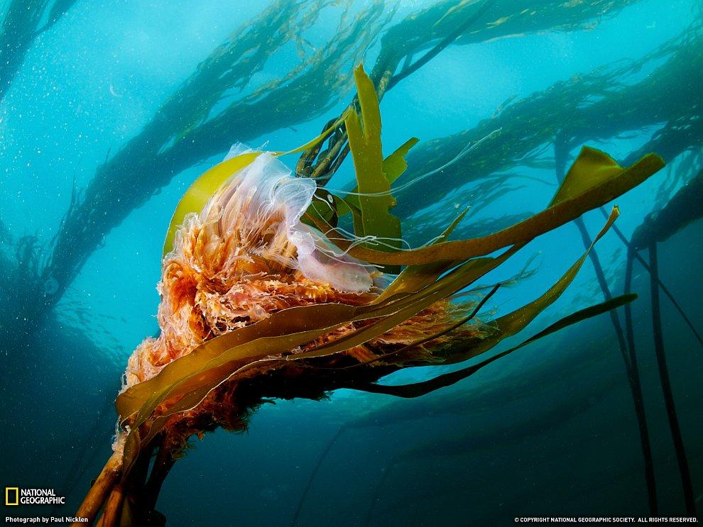 Поразительный подводный мир