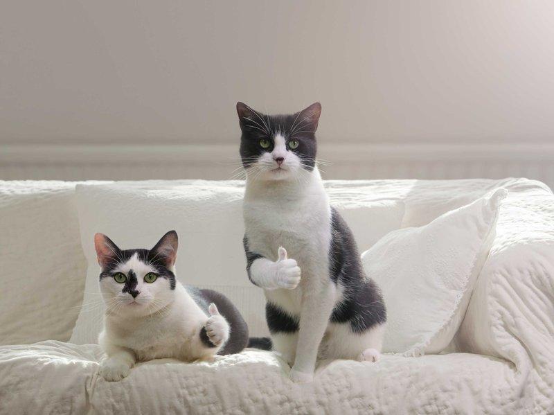 А у вас случались подобные пропажи животных? видео, животные, кот, кошка, прикол, пропажа, юмор