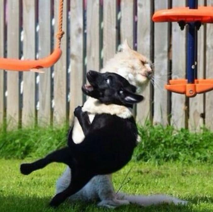 Опасные котики!