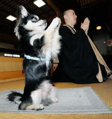 Предания и суеверия о собаках