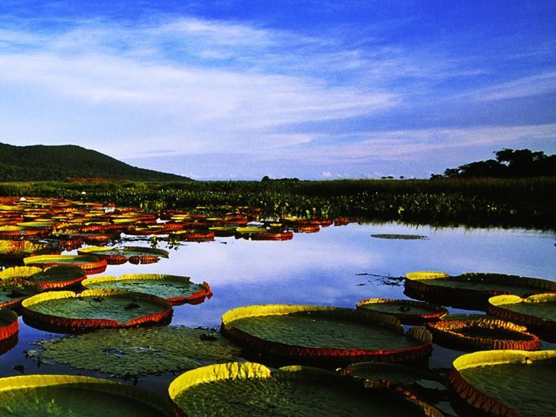14. Пантанал, Бразилия. красивые места, прекрасная планета, чудеса природы