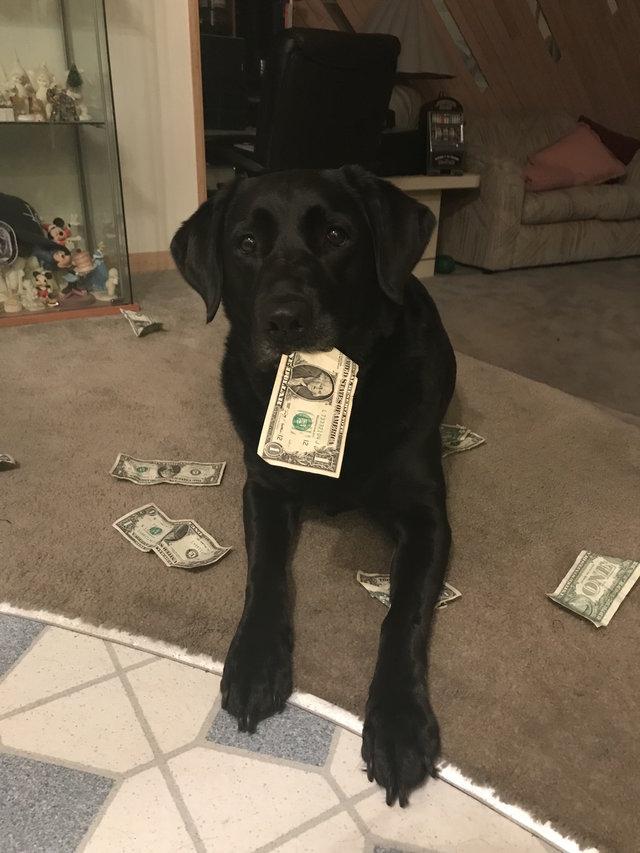 Еще щенком она научилась ценить деньги и теперь законно «покупает» себе вкусняшки