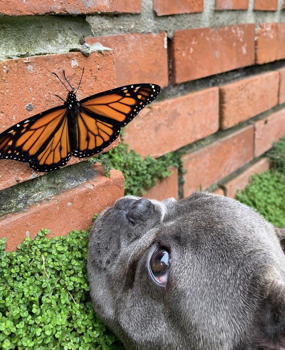 бабочка с собакой
