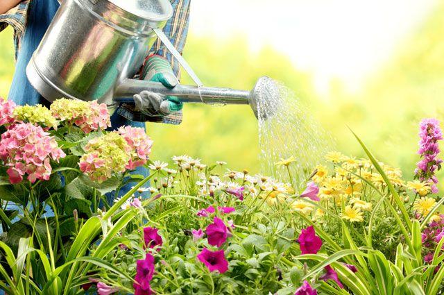 Защита. Как уберечь цветник от вредителей и болезней