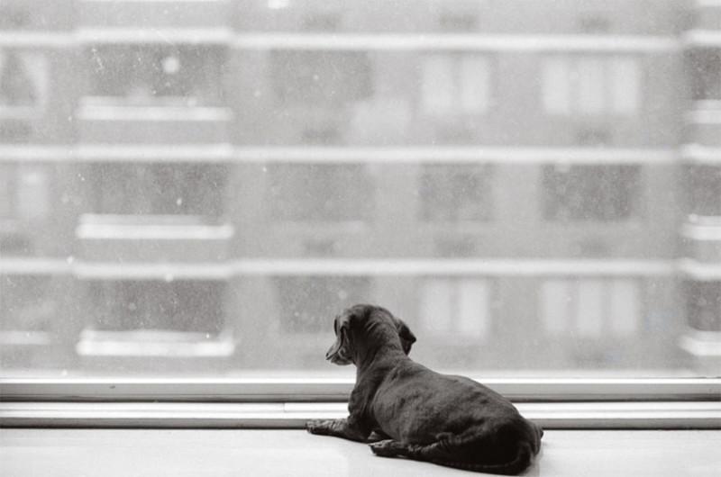 Пупи (14 лет) собаки, фото собак, фотографии животных