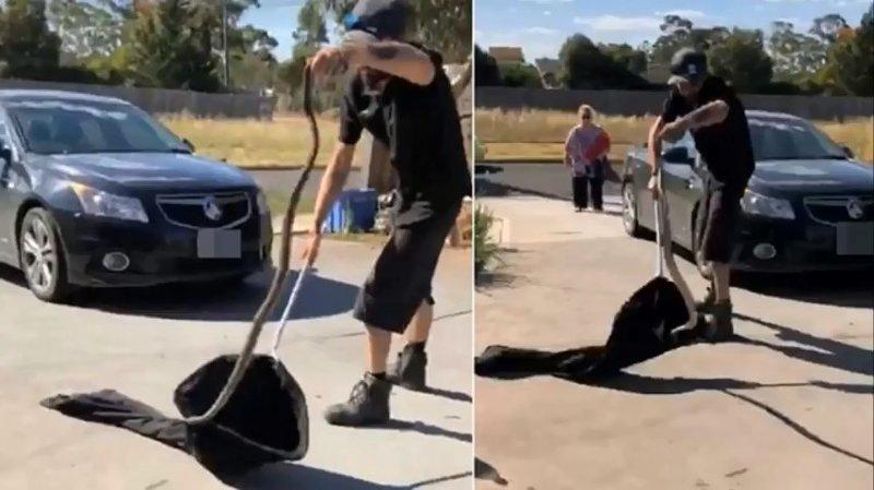 Охотник на змей из Мельбурна поймал двухметровую рептилию прямо под забором соседей