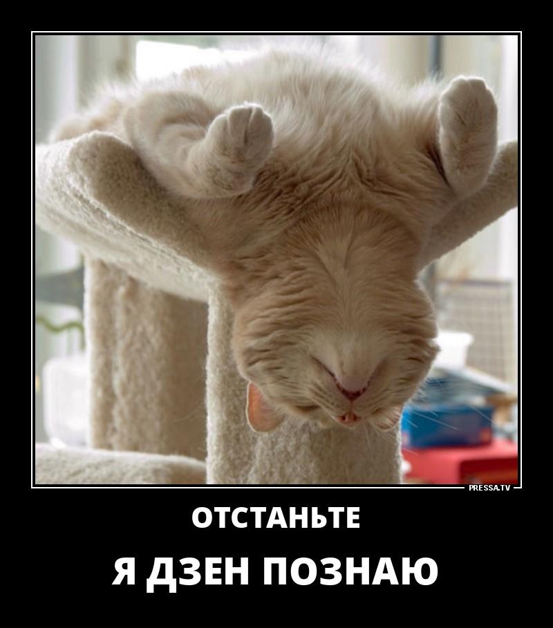 Картинка демотиватор спокойной ночи