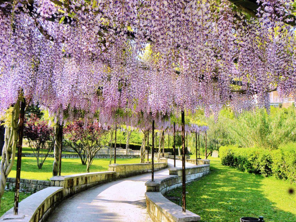 Картинки садов цветущих