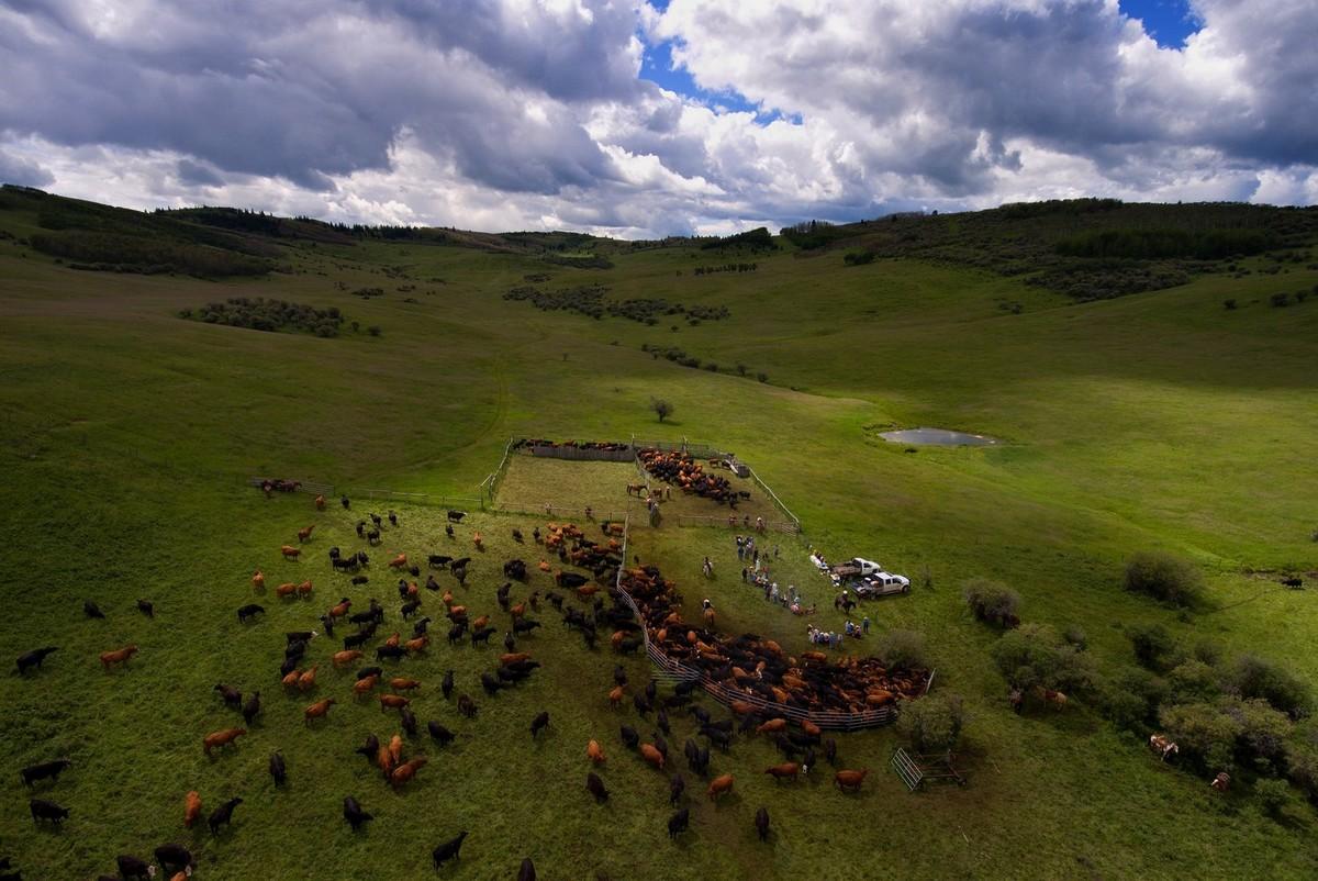 Удивительная жизнь канадских ранчо