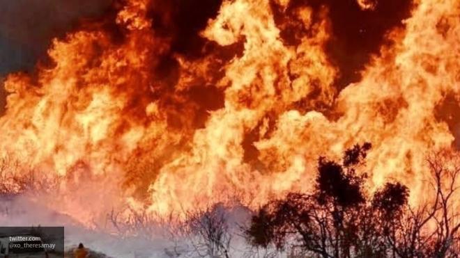 В Удмуртии мальчик спас из огня дедушку, брата и собаку