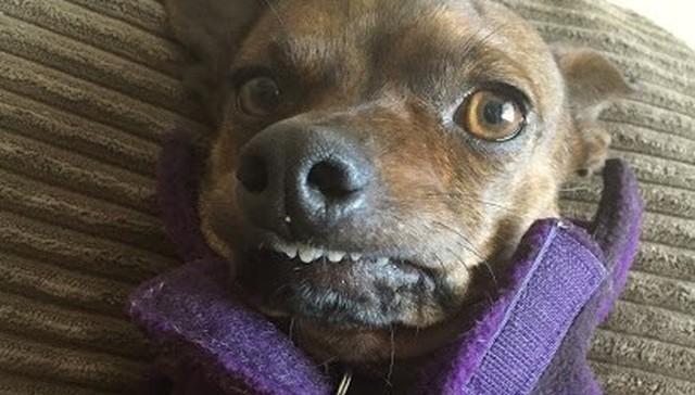 Никому ненужная собака теперь – модель с собственным гардеробом.