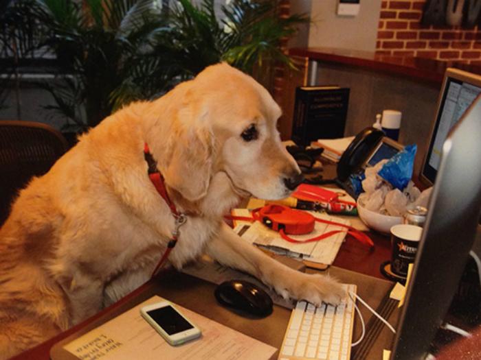Самый серьезный в мире пес.