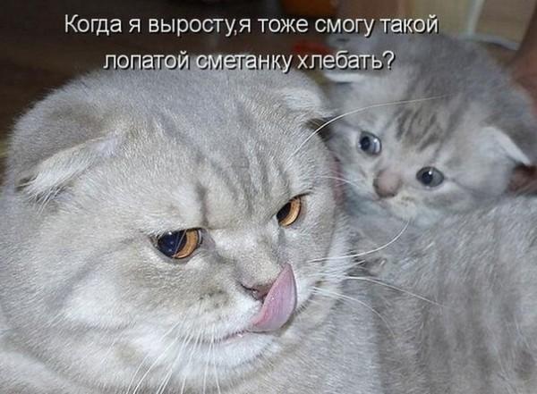 Ура!  Сегодня будут пятничные котики!