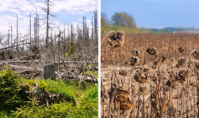 Что будет с планетой после исчезновения тропических лесов Амазонки