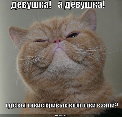"""""""ЛОЛКОТЫ"""". ФОТО КОТОВ С ПРИКОЛЬНЫМИ НАДПИСЯМИ-11."""