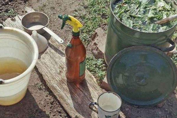 Рецепты отворотного зелья от вредителей