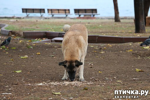 Собака-подбирака… Что делать?