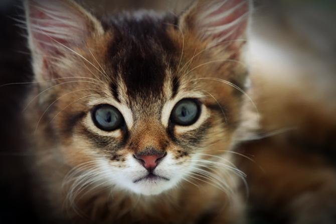 картинки кошки красивые