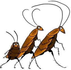Какие тараканы живут в вашей…