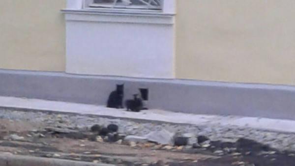 Котят замуровали в подвале д…