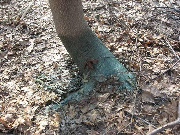 Как быстро уничтожить дерево не срубая его