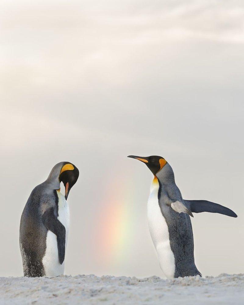 У основания радуги, Джошуа Галицки national geographic, конкурс, красота, природа, удивительно, фото, фотография, фотоподборка