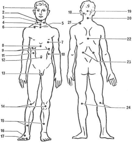 Сексуальные точки мужского тела ваша