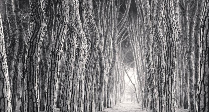 Деревья, как люди: незабываемые портреты деревьев от Майкла Кенны