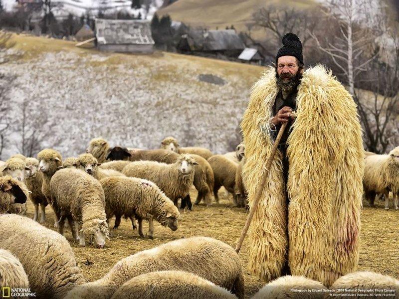 Пастух из Трансильвании, Эдуард Гутеску national geographic, конкурс, красота, природа, удивительно, фото, фотография, фотоподборка