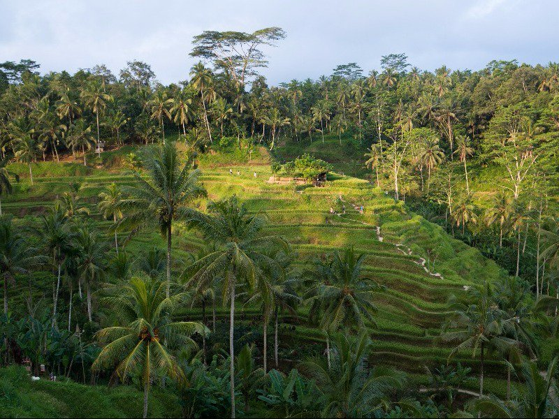 МЕСТА ДАЛЁКИЕ И БЛИЗКИЕ. Популярные развлечения на Бали