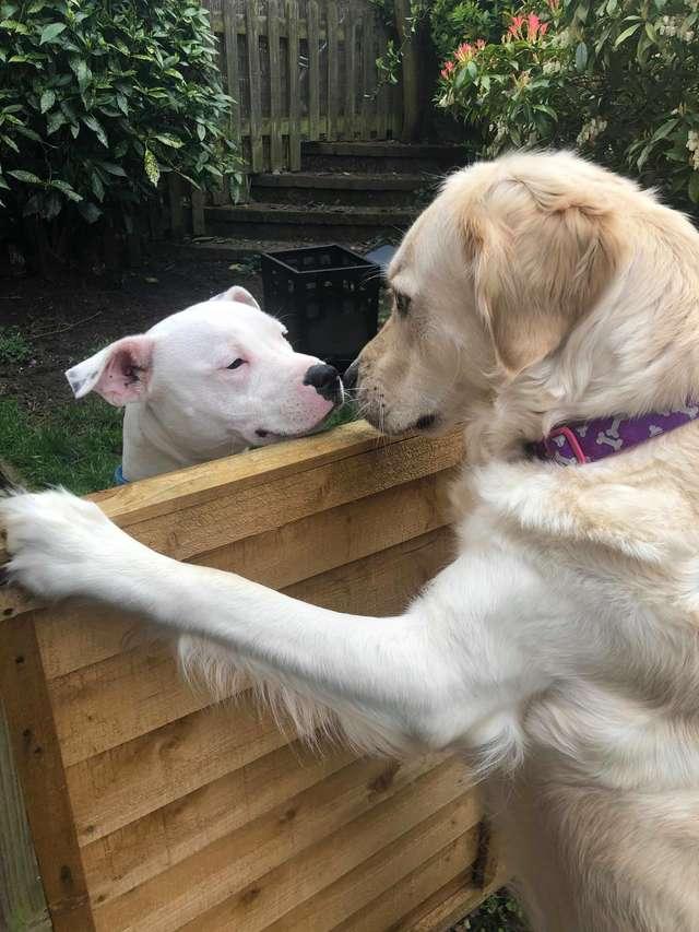Влюбилась в соседского мальчишку: собака познакомилась с псом и между ними вспыхнули чувства не всё так грустно