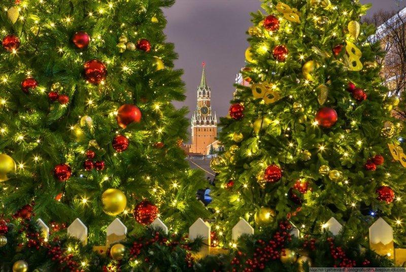 Сказочный лес сверкает огнями гирлянд и становится ещё более фантастическим. красиво, красота, москва, новый год, праздник, рождество, столица, фотография