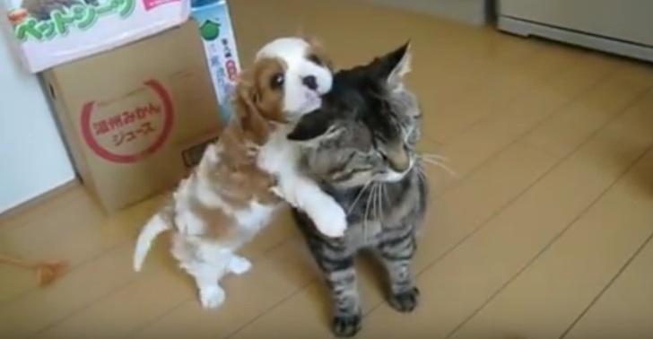 Щеночек подружился с котом… …