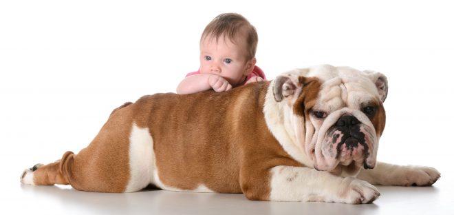 10 пород собак, которые идеально подходят для семьи с ребенком