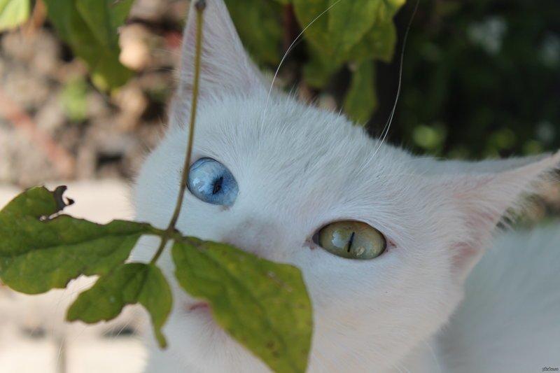 Животные тоже частенько подкидывают пищу для размышлений. photoshop, загадка, искусство, прикол, фотография, фотошоп, шедевр, юмор