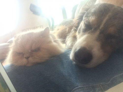 Удивительная дружба кошек и собак