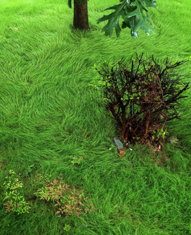 Удивительный рисунок травы