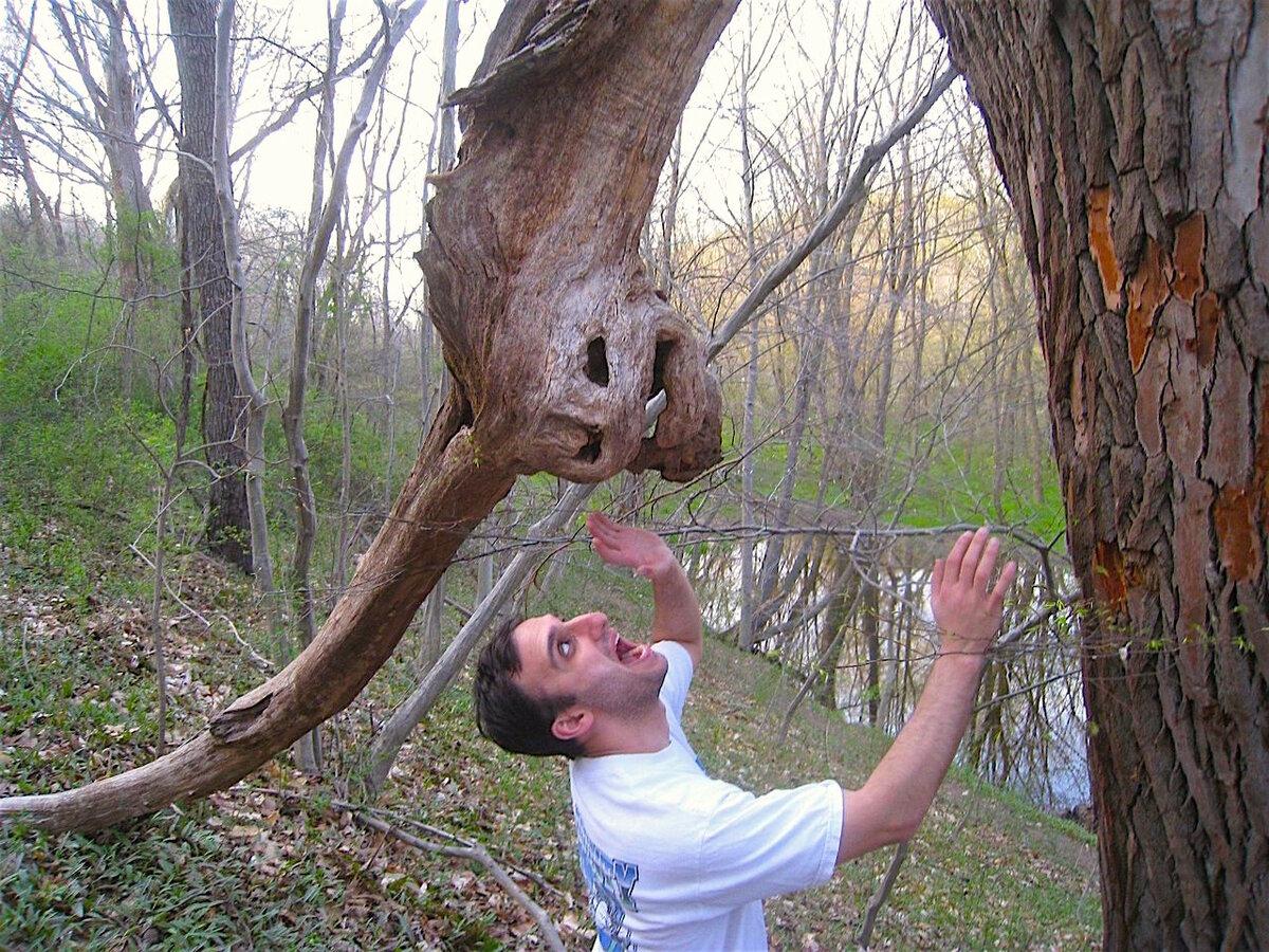 Открытки художники, смешная картинка мужик на дереве