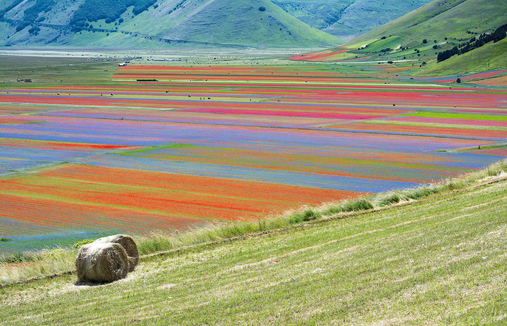Обычный летний день на цветущих полях Италии