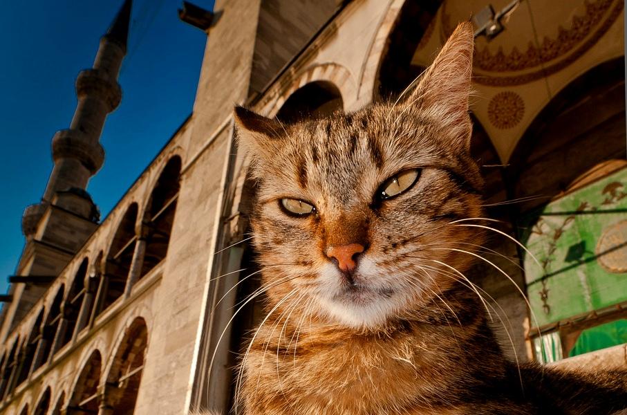КОШКИН ДОМ. История кошек на Востоке