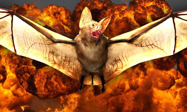 Как американцы потратили миллионы долларов на создание бомб из летучих мышей