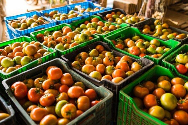 хранение собранного урожая томатов