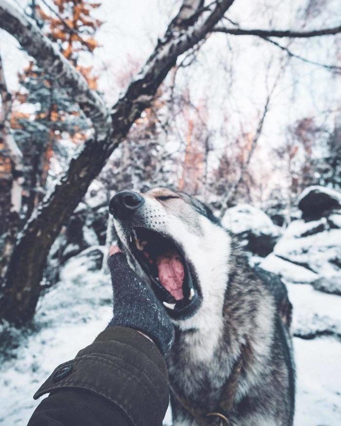5. follow me, инстаграмм, собака, собака - друг человека, флешмоб, флешмобы. instagram, фото природы, фотограф