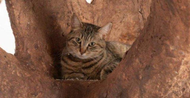 Дерево для настоящего учёного кота декор,дерево в интерьере