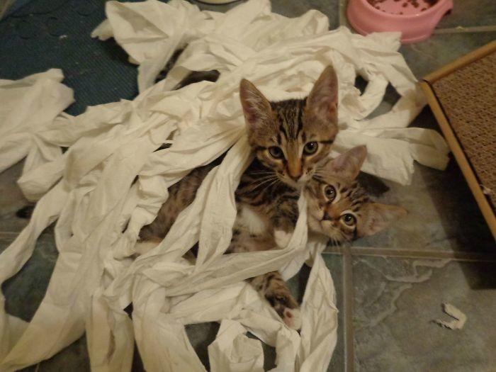 Игры с туалетной бумагой дом, животные, проступок, шалость