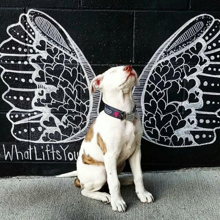 Идея для фото собакенов гостей