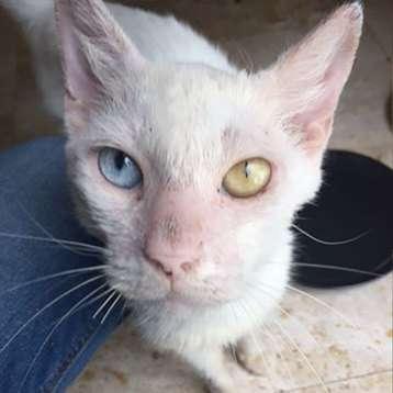 Умирающий котенок попал в нужные руки и вырос в кота с необычной внешностью